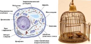 Картинка к слову клетка