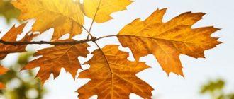 Картинка к слову осень