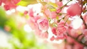 Картинка к слову весна