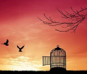 Картинка к слову свобода