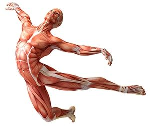 Картинка к слову синквейн анатомия