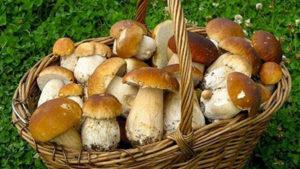 Картинка к слову грибы