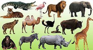 Картинка к слову животные