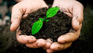 Картинка к слову почва